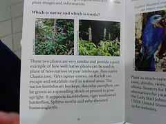 Exotic Chaste Tree, Vitex agnus-castus v. native bottlebrush buckeye, Aesculus parviflora